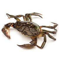 Cangrejo de mar, al peso, compra mínima 500 g